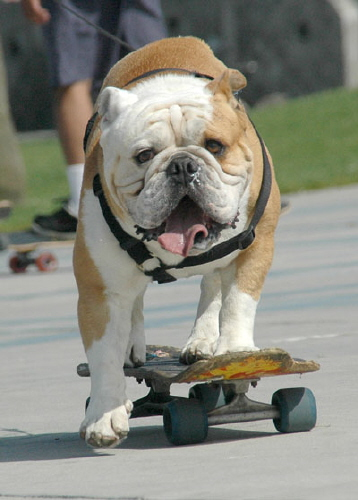 A Dream About A Bulldog With A Blowhole Minus The