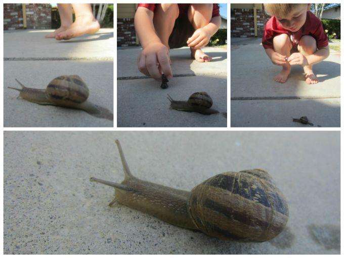 snail California