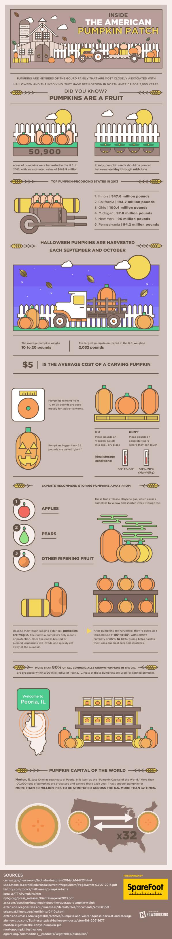 pumpkins infographic
