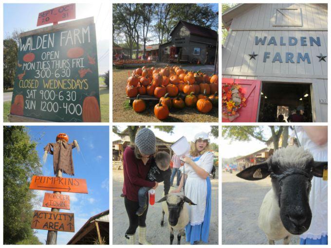 Walden Farm Pumpkin Patch