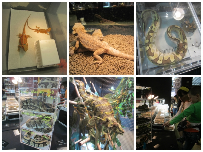 Dear Jack: Our Visit To Repticon 2015 in Franklin, TN