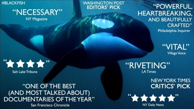 The Surprising Reason I'm Happiest about Sea World Removing Orcas from Their Shows