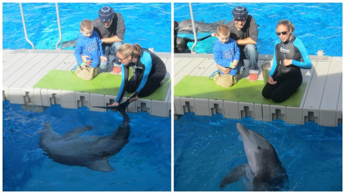 Dear Jack: You Got to Pet and Feed Dolphins at the Gulfarium Marine Adventure Park!