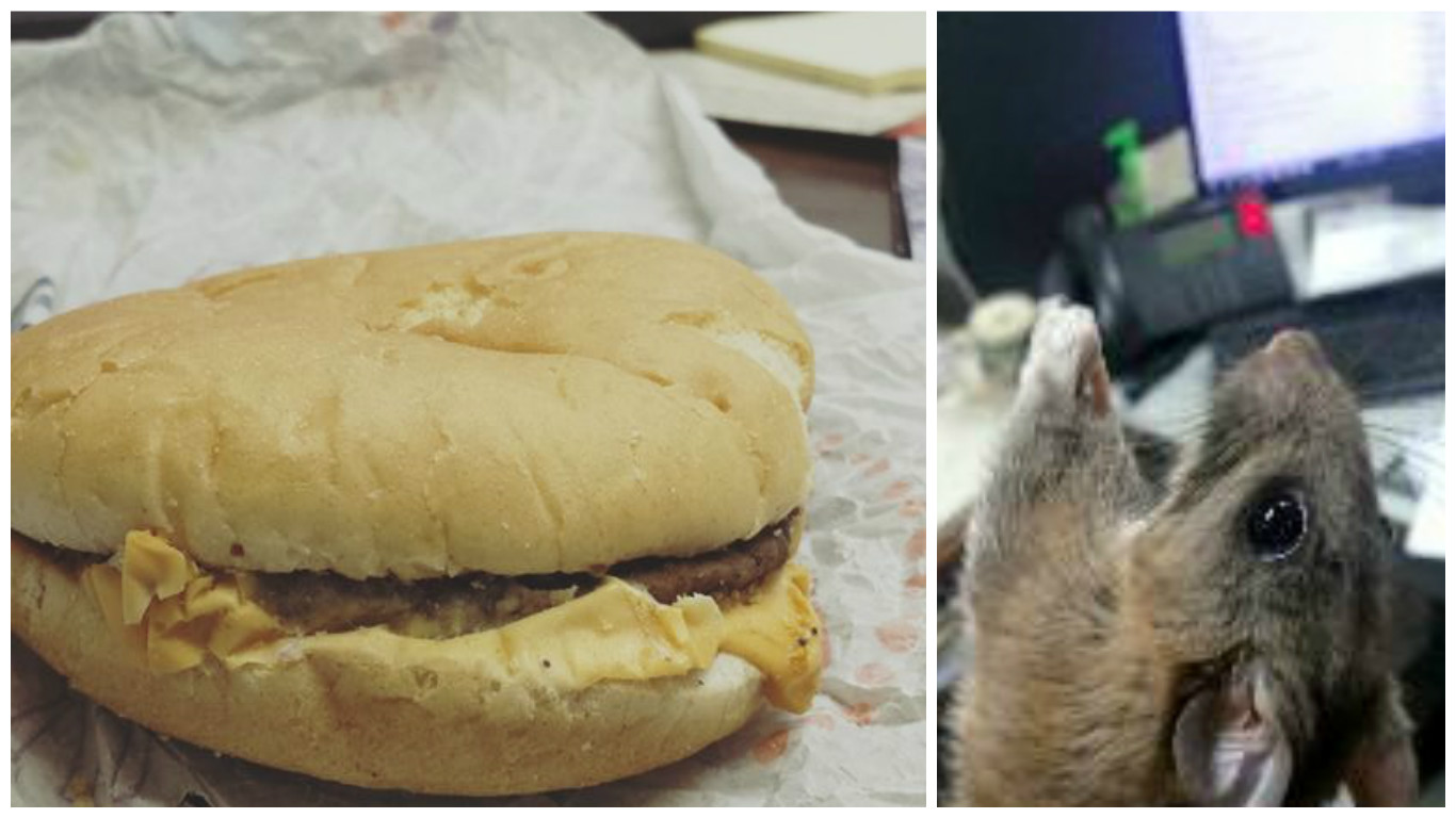"""2017 Toyota 4Runner >> My Dad's """"Rat Burger"""" Story: A Rat Refused to Eat His ..."""
