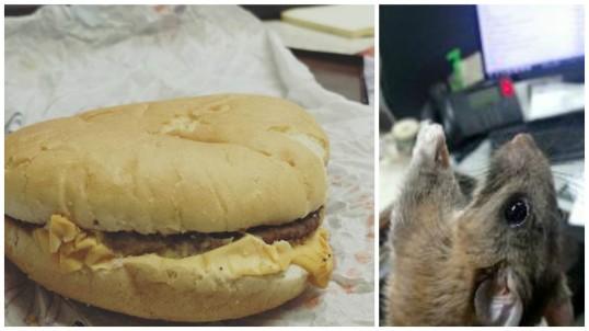 rat burger