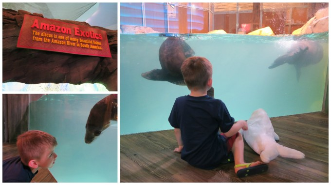 Dear Jack: Our Trip to the Atlanta Aquarium